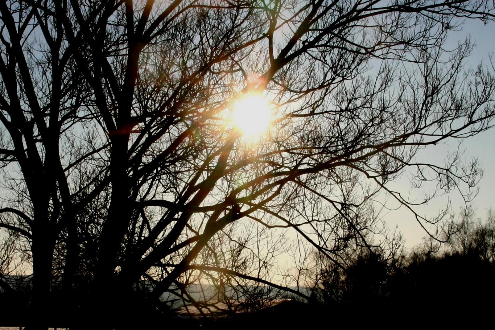 Ligne 38 soleil contre-jour gr plan